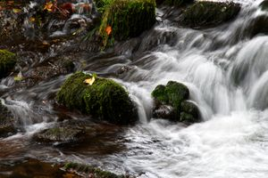 Waterfall with leaves