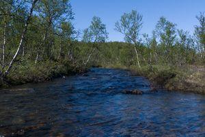 Small river stream