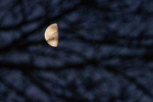 Half Moon through the trees at 6am