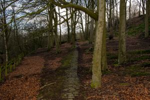 Cobbles Through the Trees
