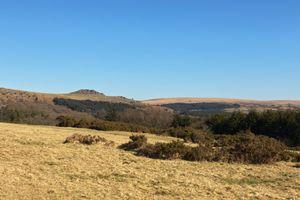 Sharpitor Dartmoor