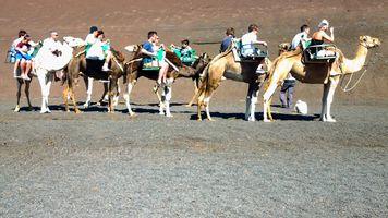 Camel Ride Timanfaya.