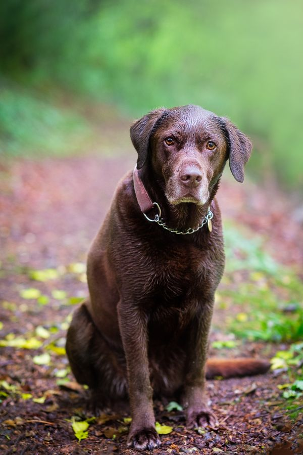 Wet Dog in his favourite woods