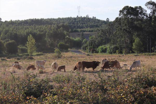 Mundo Rural 1