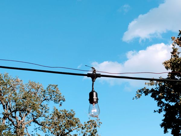 Dragon fly on a line