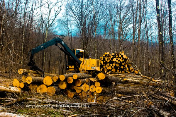 Logging on Cold Knob