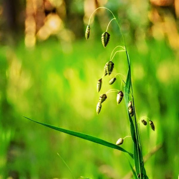 Green palnt