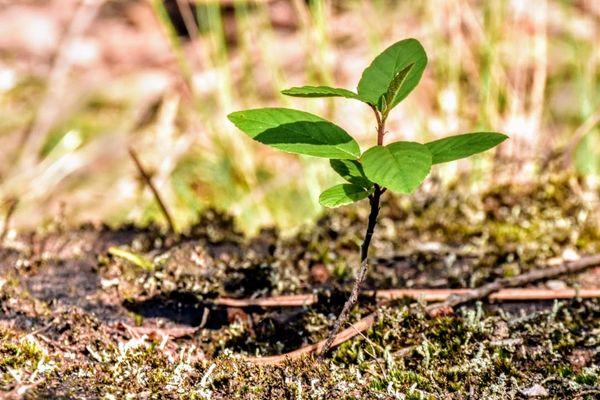 Litlte plant