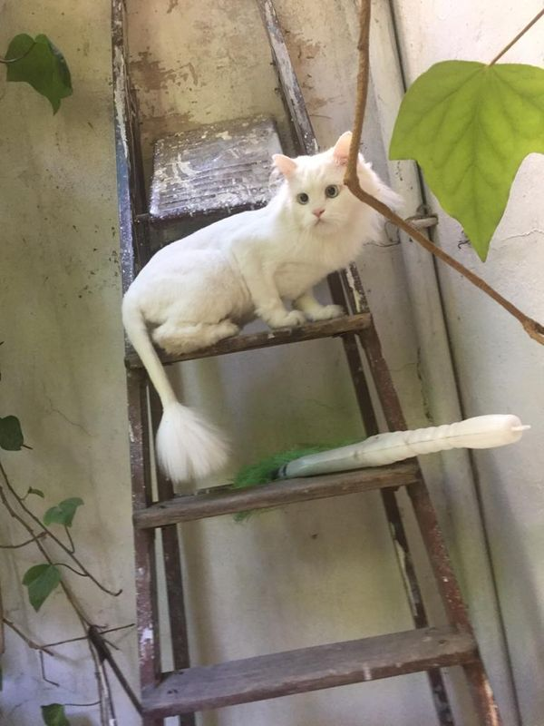 Climbing up the ladder