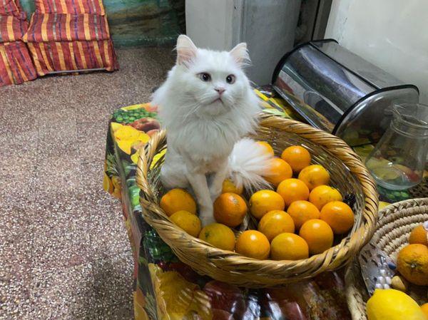 I like orange