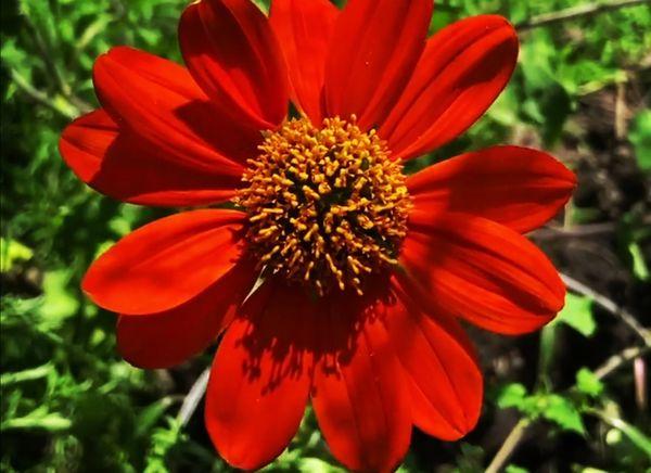 Flower farm visit
