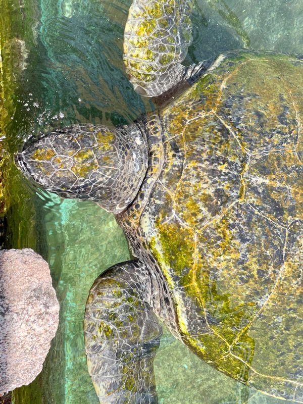 Sea turtle ????