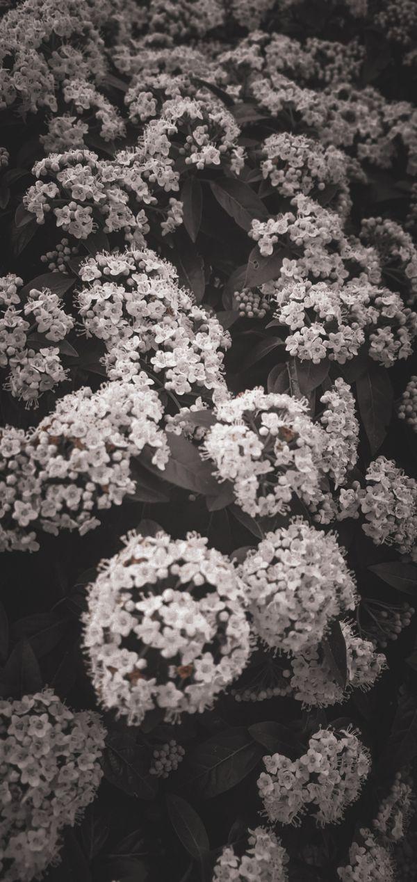 Black &White Flowers