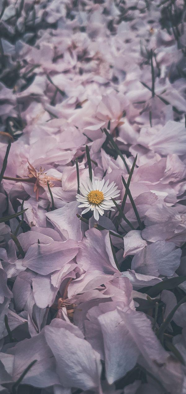 Flower blanket  :)