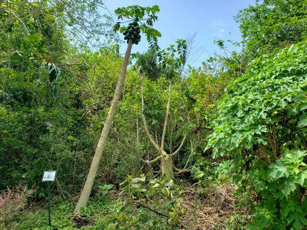 Jungle-like plants