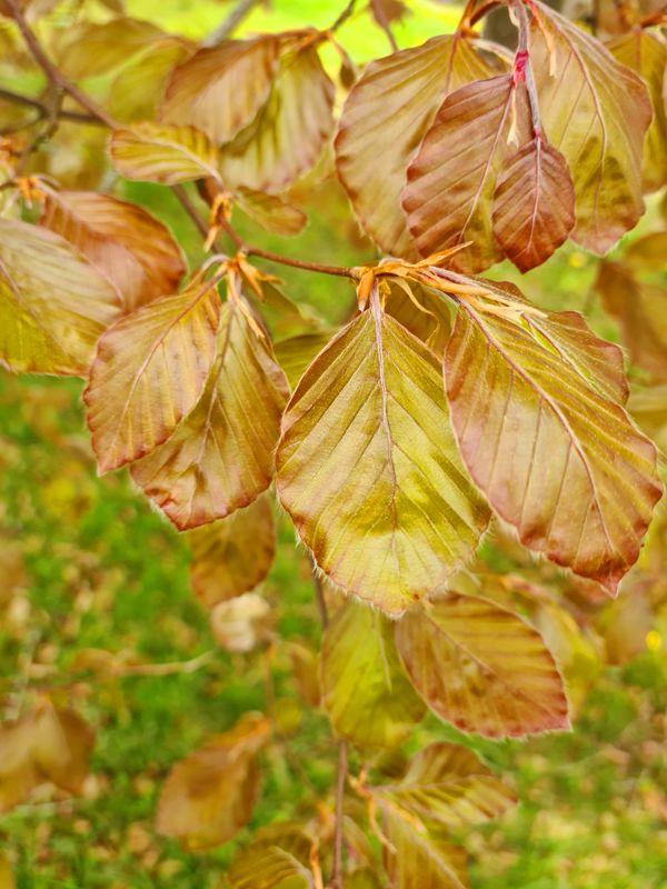 Leaves on the tree.