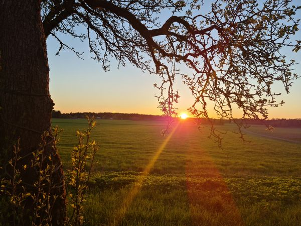 Sunset shining by the tree in the countryside.