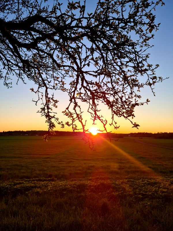 Sunset shines by the tree in the countryside.