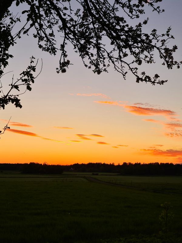 Nice sky and sunset by the tree in the countryside.