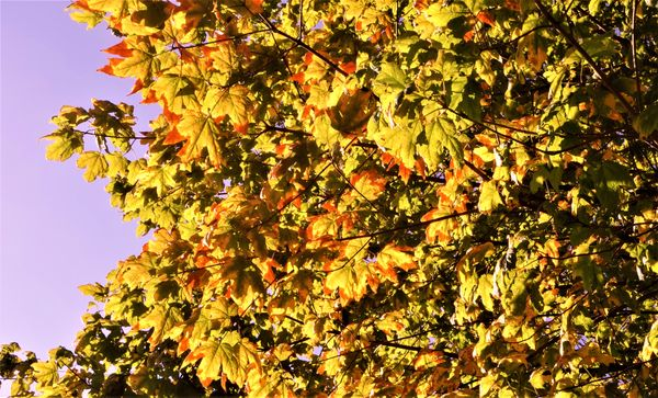 Early Autumn.