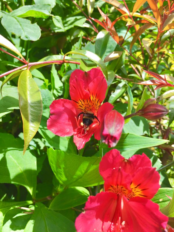 Bee 2,