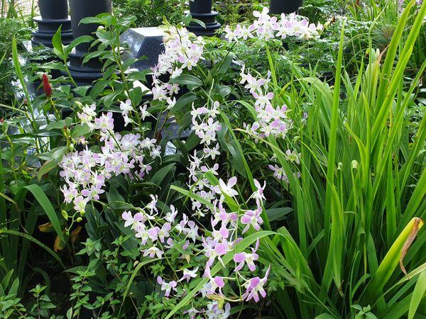 Orchids4