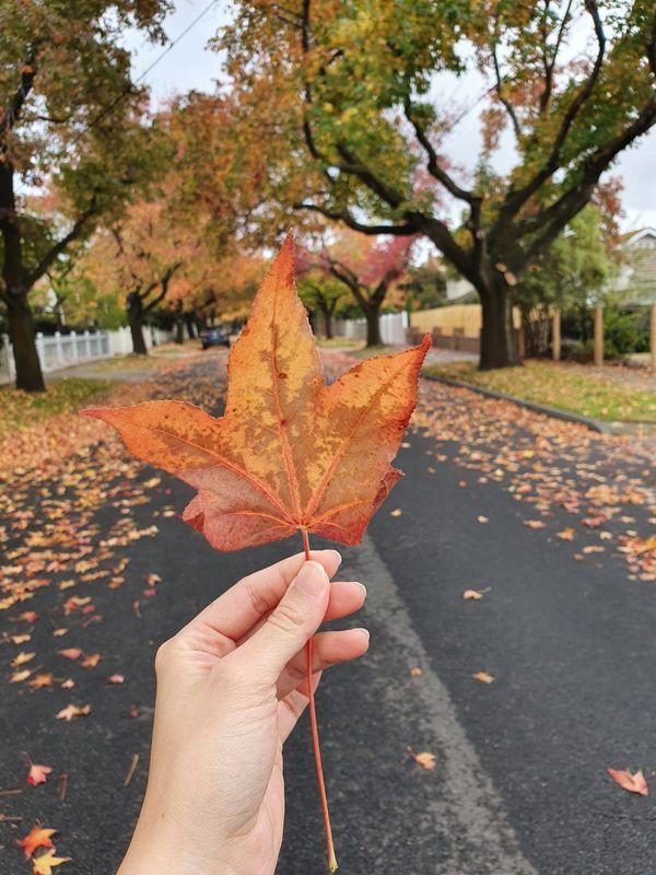 Autumn colour close up