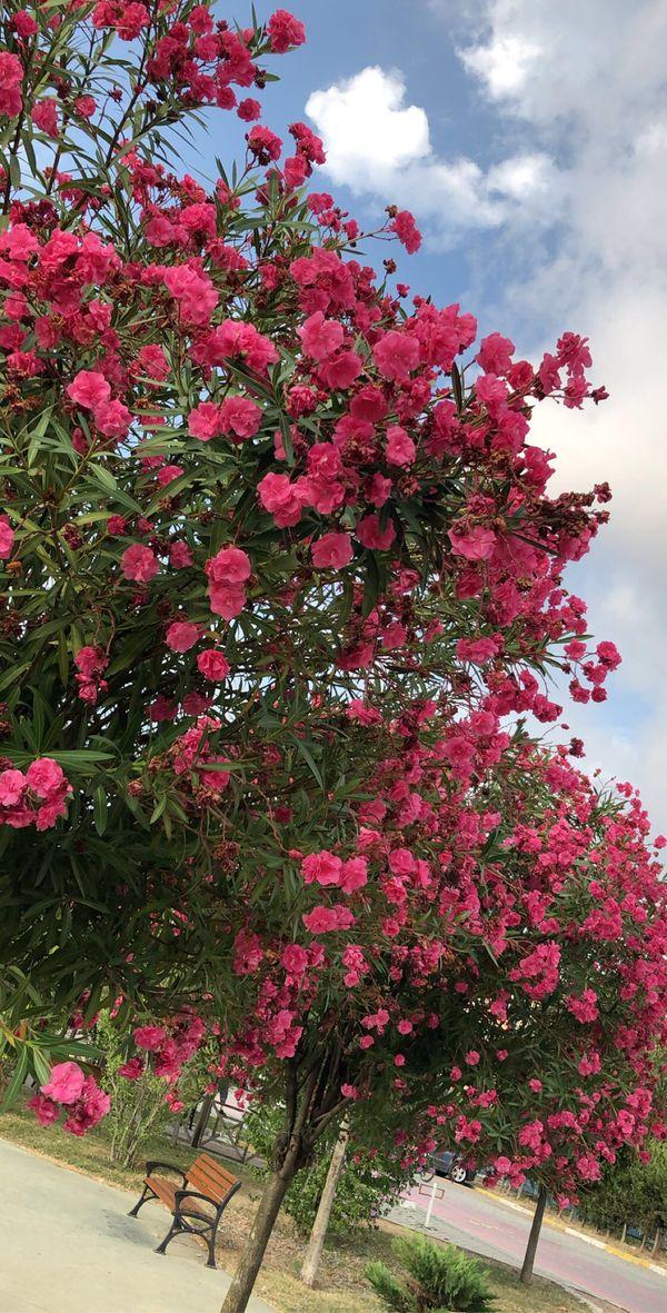 LIKE IF YOU LOVE FLOWERS