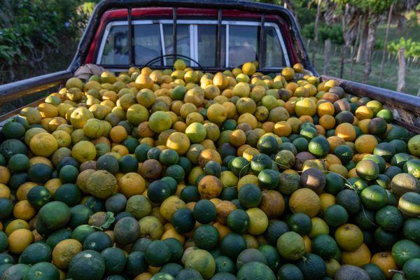 Organic sour oranges