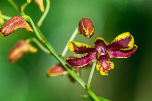 Colourful Orchid