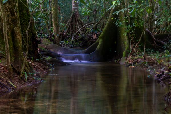 In the jungle