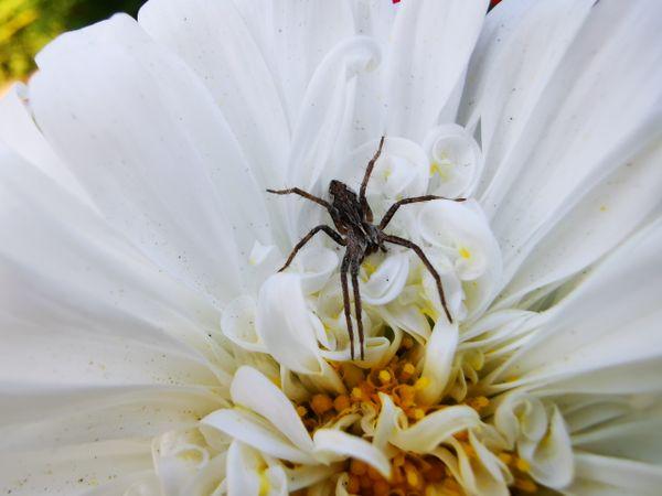Little spider2