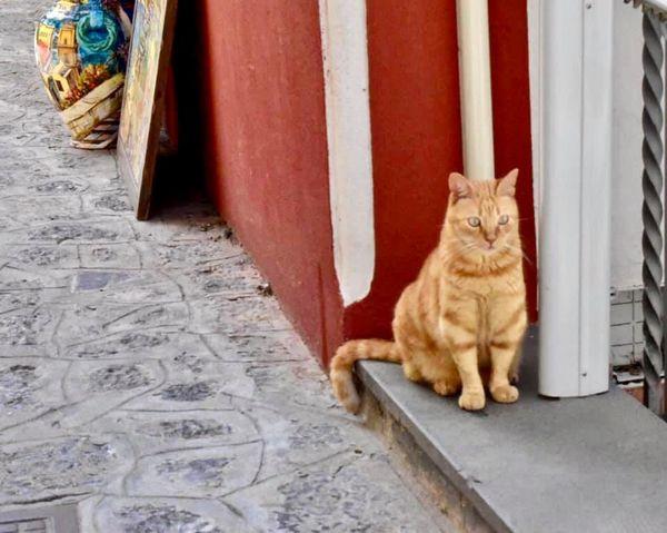 Cat of the street