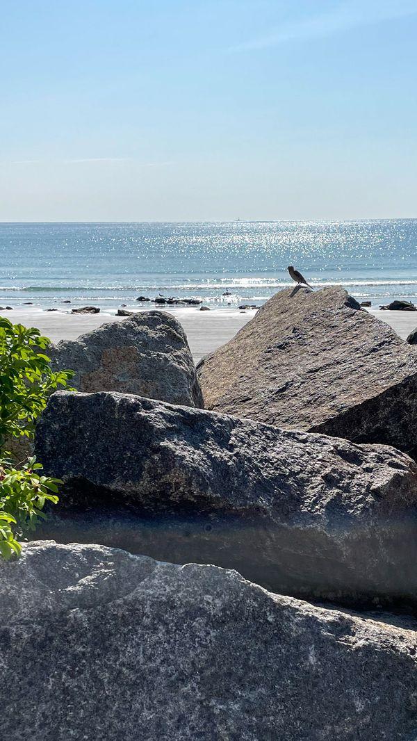 Sparrow on Rocks