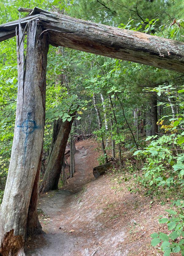 Broken tree around the bend