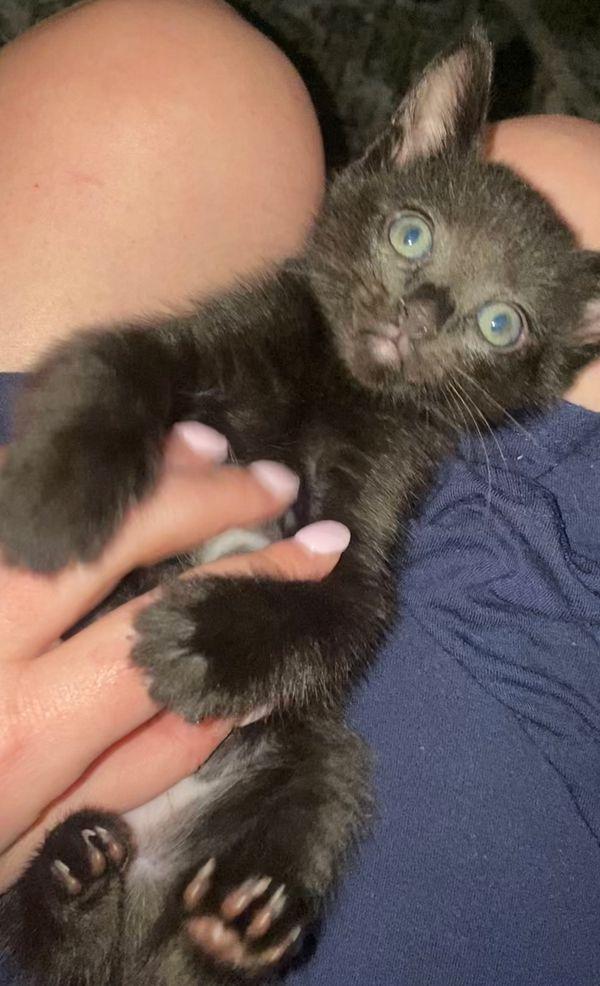 Baby Onyx