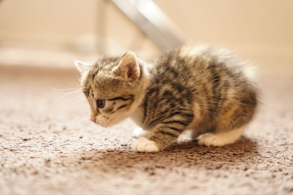 Story Day 27 : The Kitten learn to walk