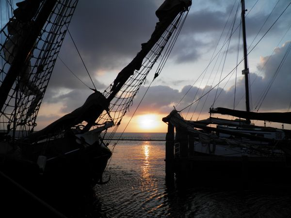 The romantic Sealife