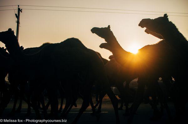 Pushkar 2020
