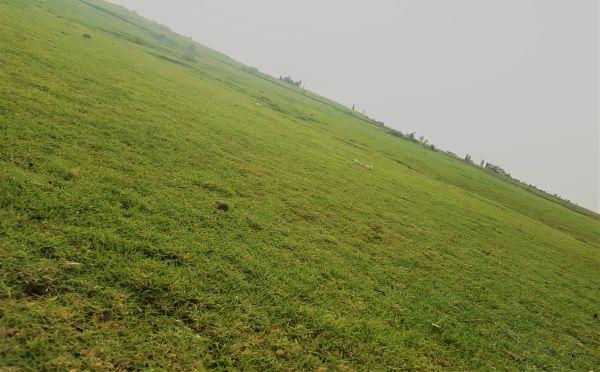 Green Land in Ibb