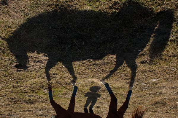 Shadows at the horse races