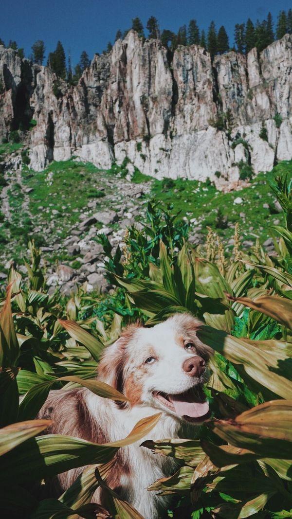 Hiking pup