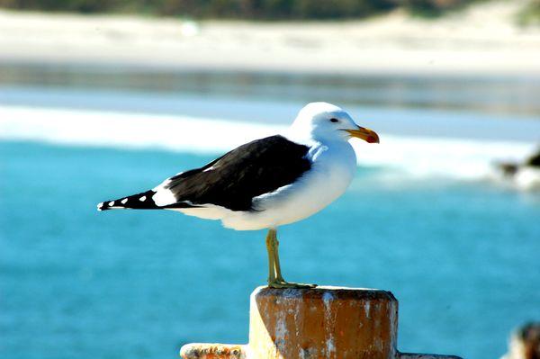 Bird 101