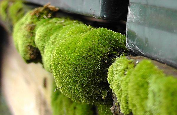 Furry Green Moss