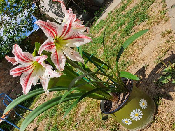 Beautiful flower3