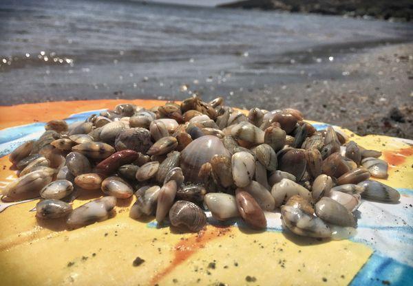 A pile full of sea life!!