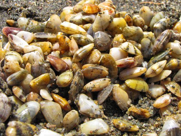 Small sea shells all over!!!