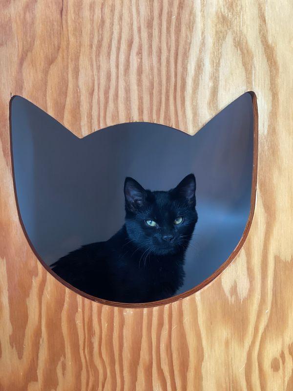 Cat in Cat-shaped box