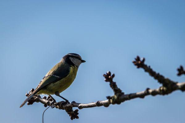Bird on a branch-9517