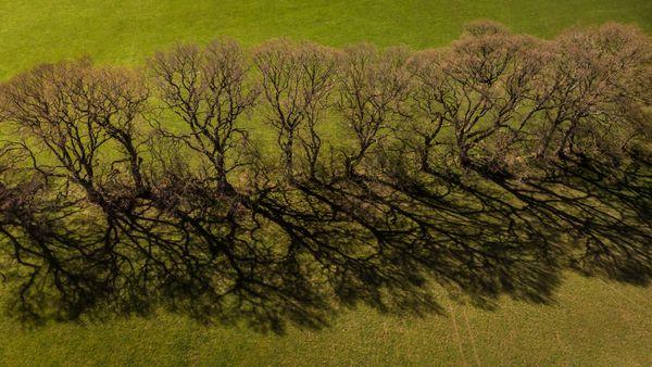 Tree line-0453